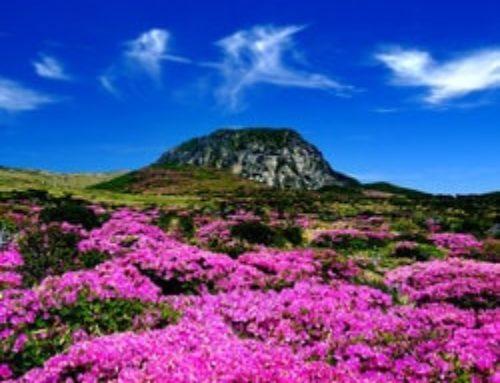 Le projet de casino Glorious Hill en Corée du Sud est au point mort