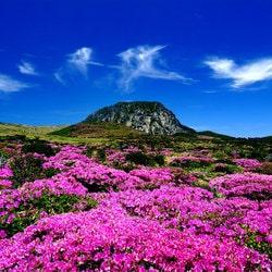Le casino en projet a Jeju Island en Corée du Sud est au point mort